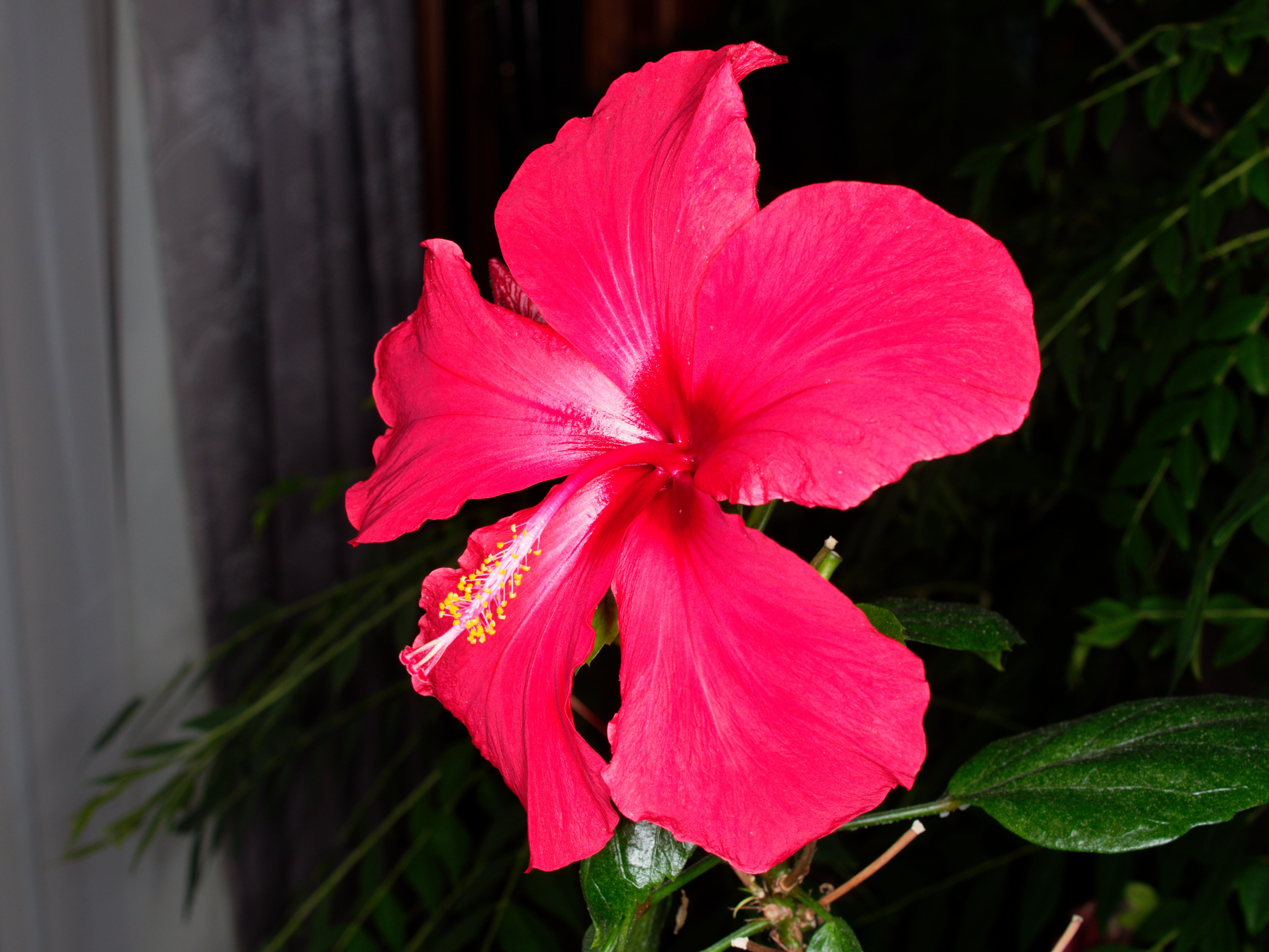 This should be Hibiscus-2.jpeg.  Is it missing?