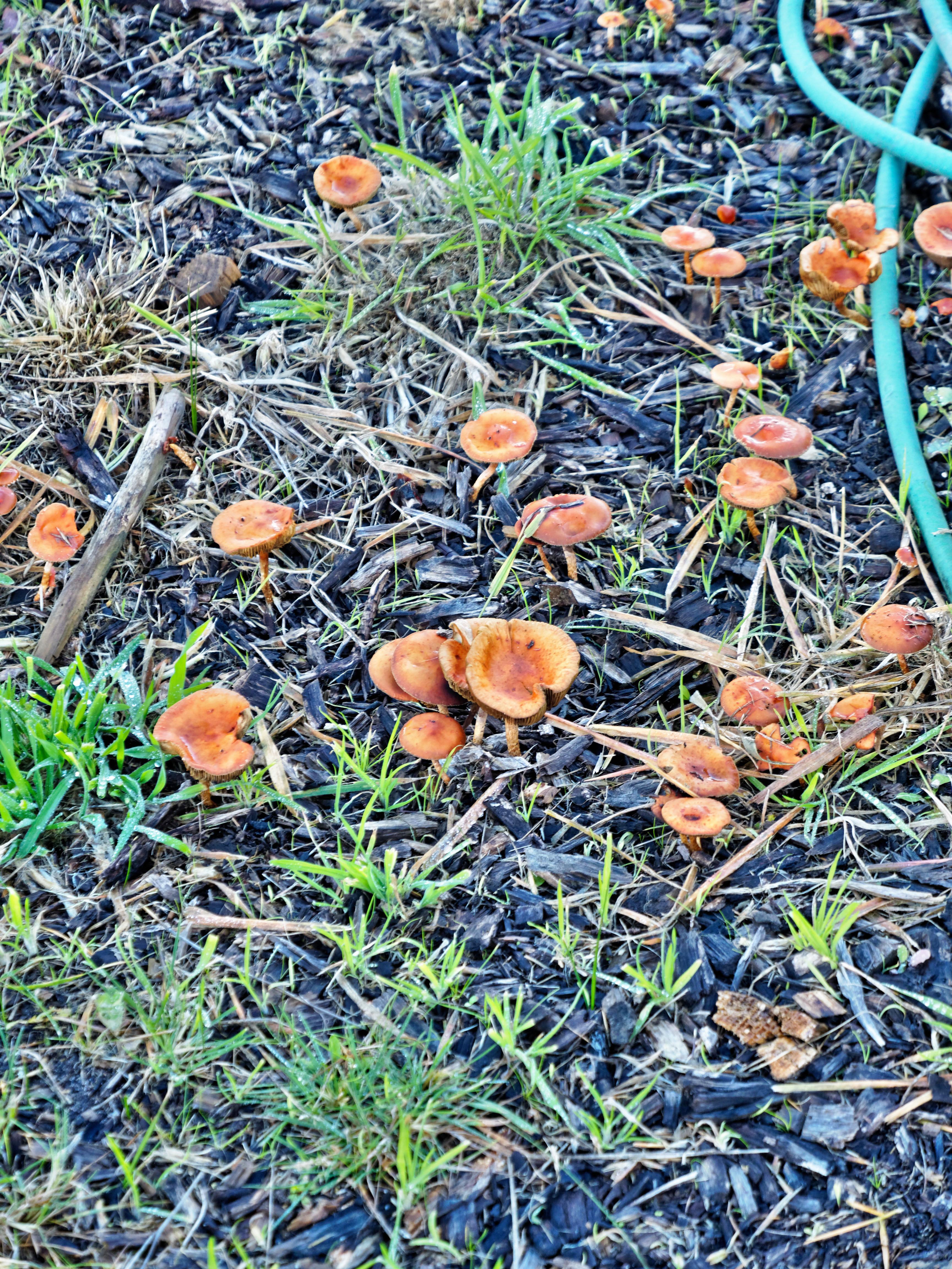 Mushrooms-2.jpeg