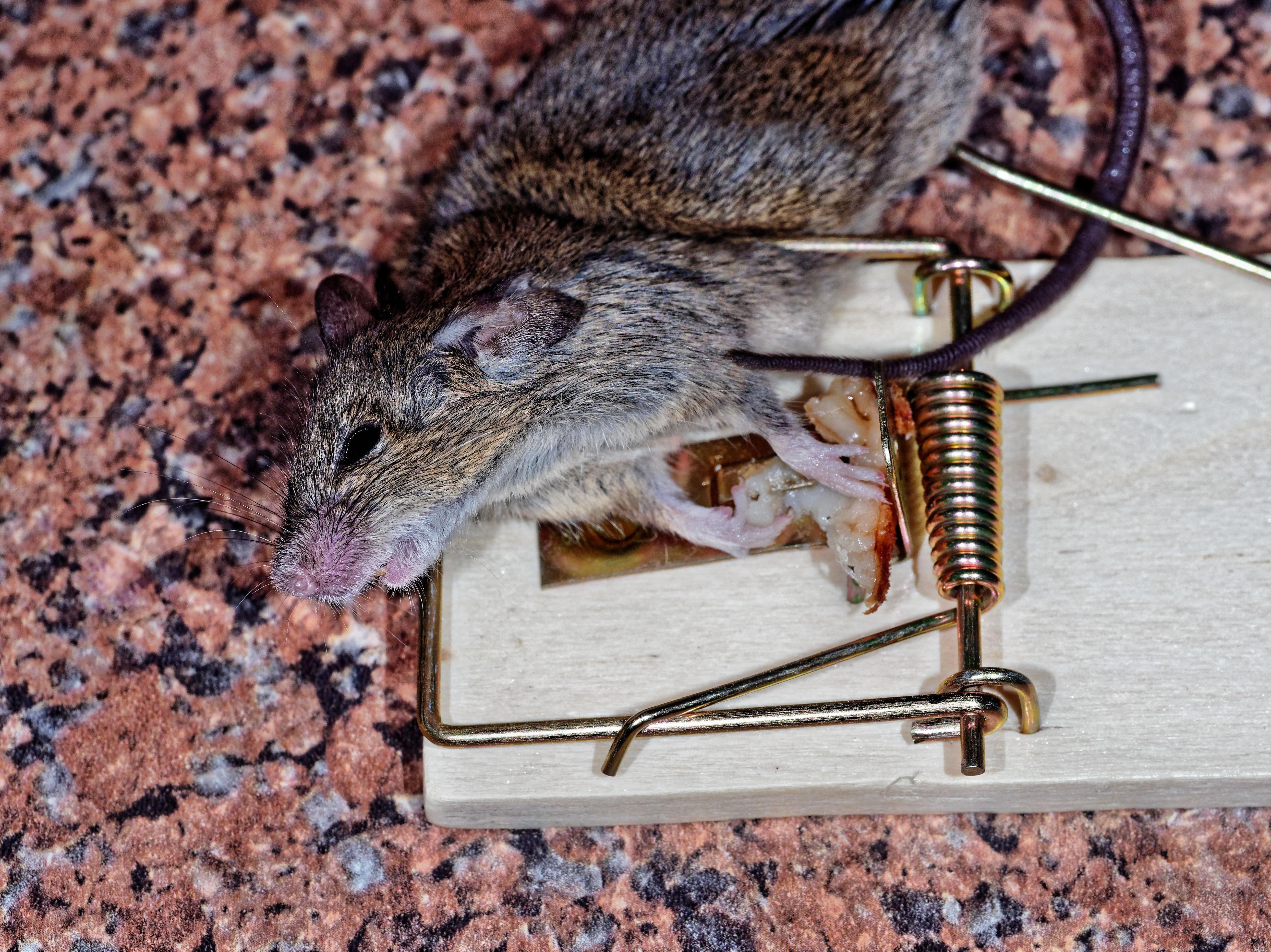 Mouse-trap-4.jpeg