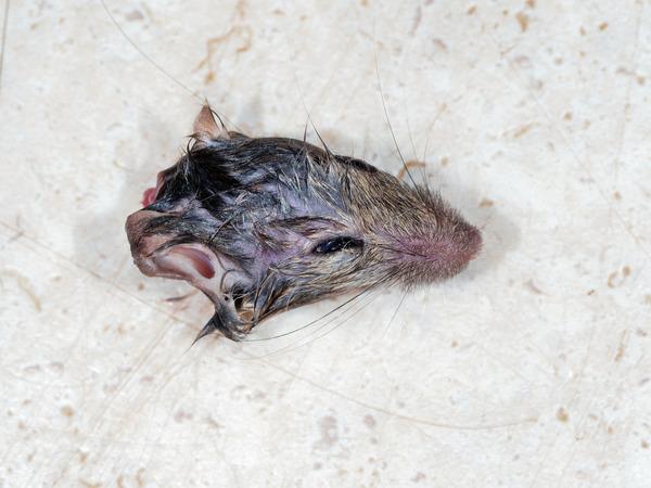 Mouse-trap-10.jpeg