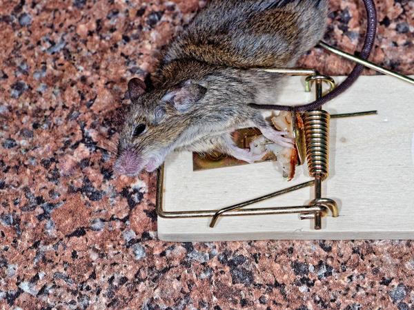 Mouse-trap-5.jpeg