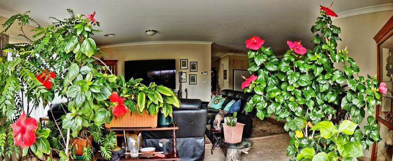 Hibiscus-cylindrical.jpeg
