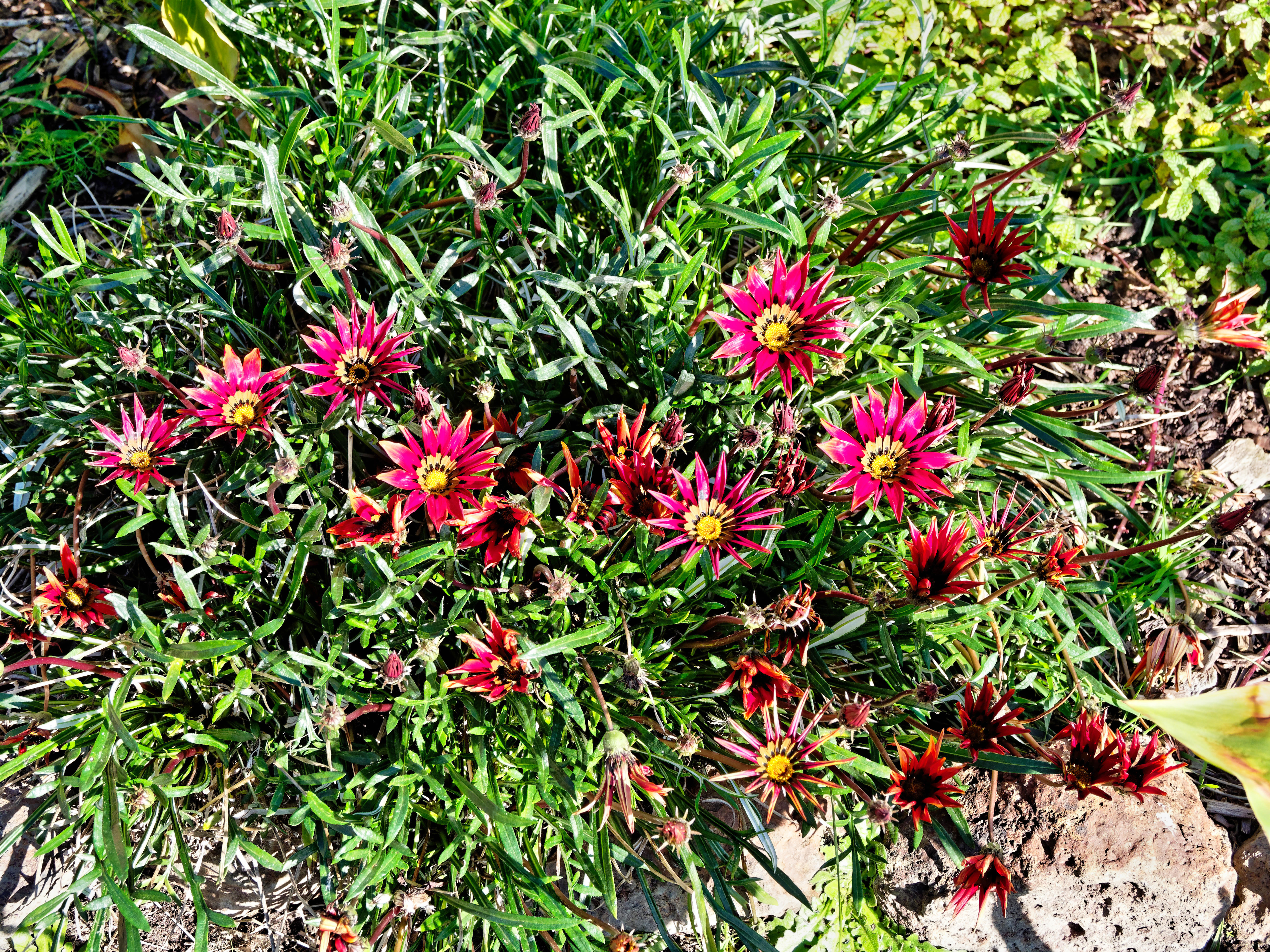 This should be Gazania.jpeg.  Is it missing?
