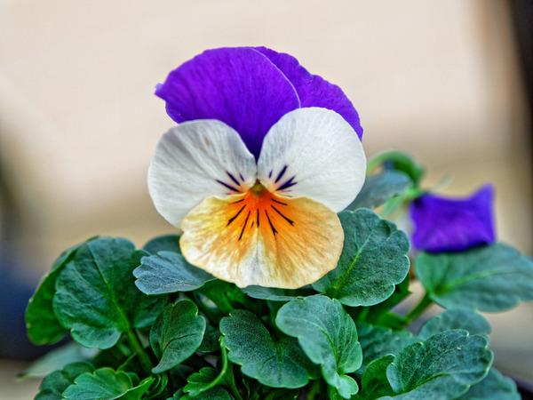 Violet-3.jpeg