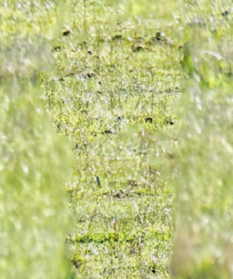 Kangaroos-47-tidied-detail-2.png