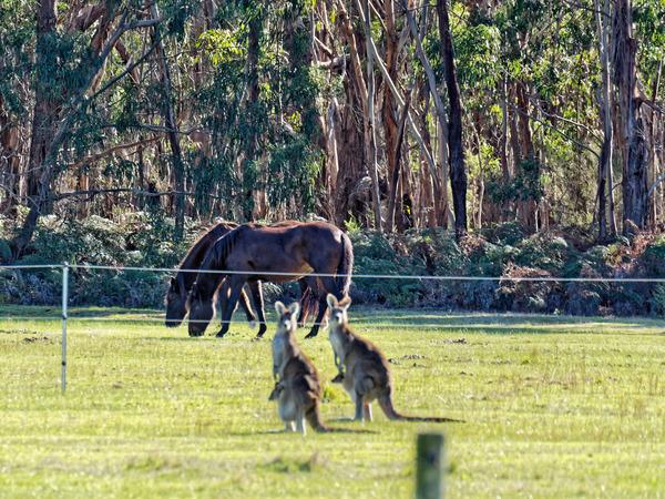 Kangaroos-57.jpeg