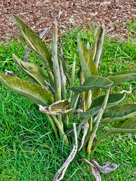 Strelitzia-reginae.jpeg
