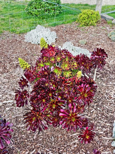 Succulent-2.jpeg