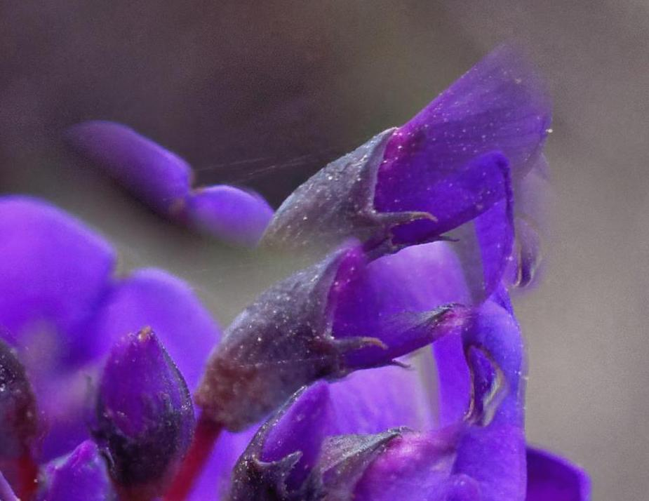 This should be Hardenbergia-1-DMap-detail-1.jpeg.  Is it missing?