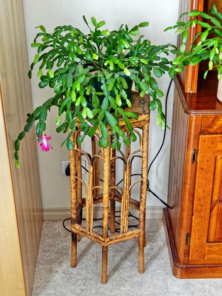 Old-stool.jpeg