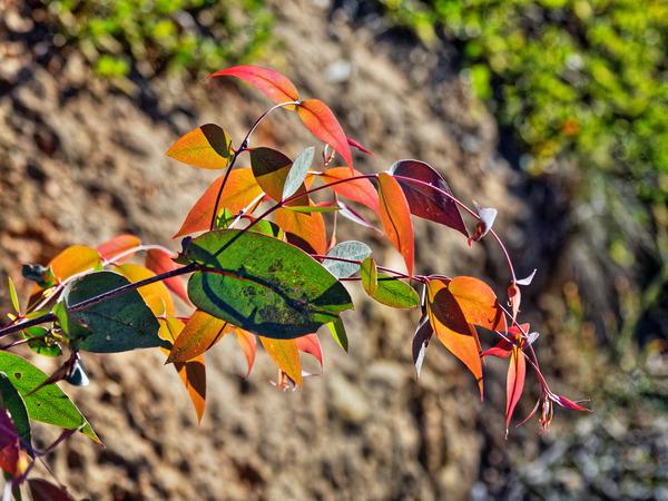 Leaves-2.jpeg
