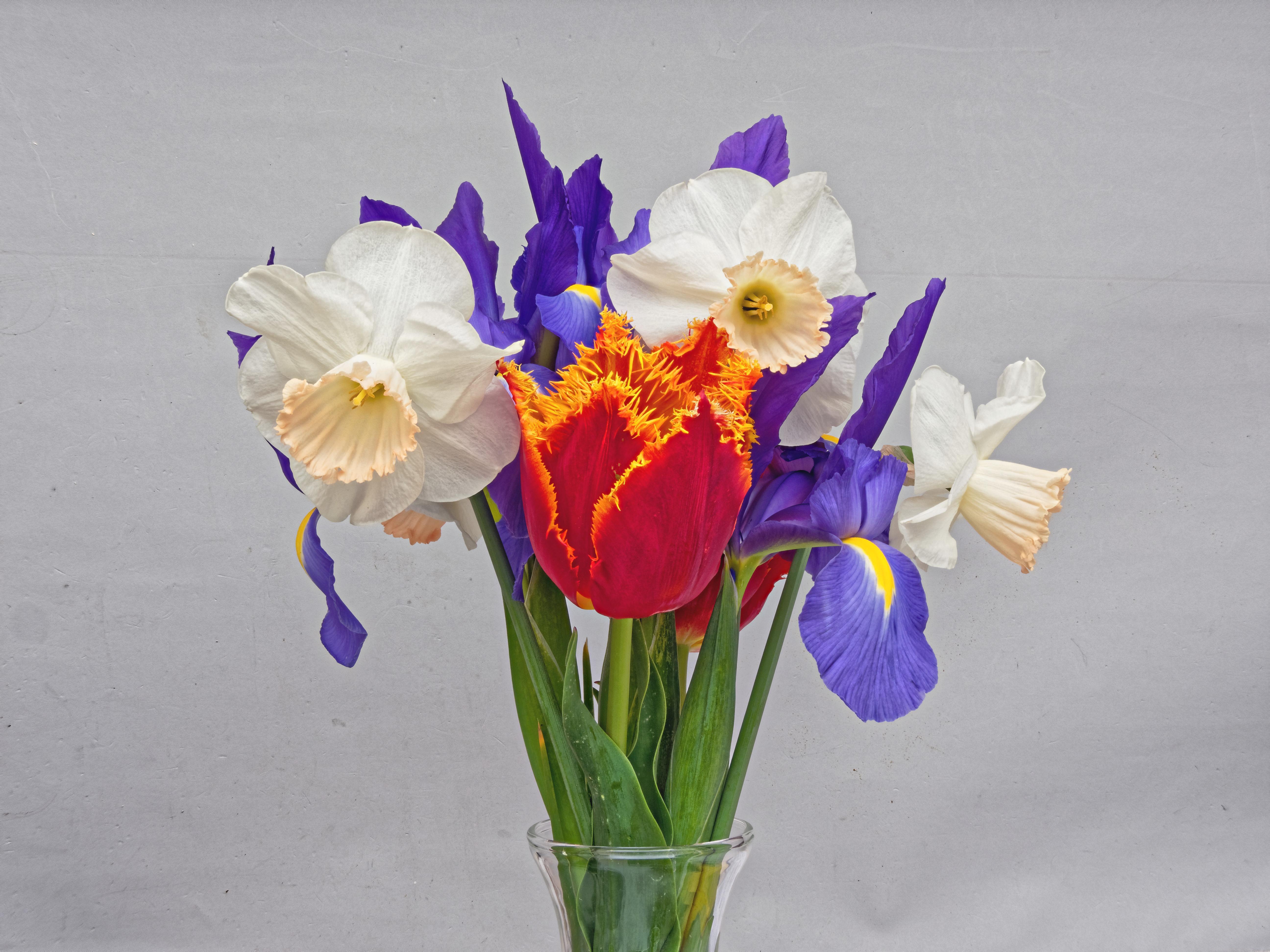 Flowers-4-PMax.jpeg