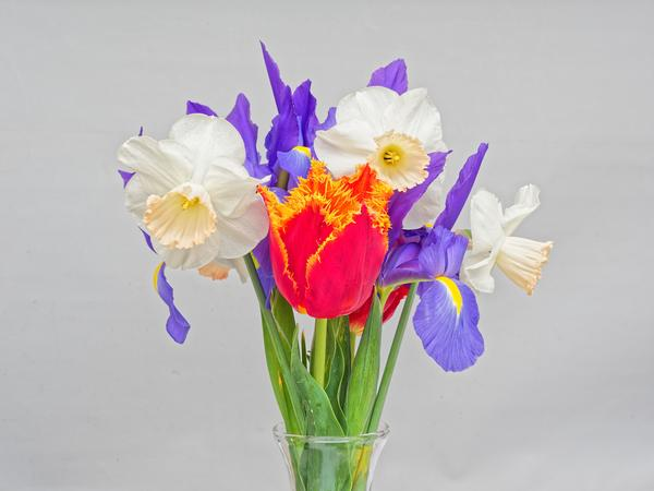 Flowers-3-DMap.jpeg