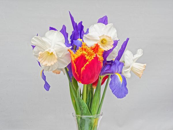 Flowers-3-PMax.jpeg