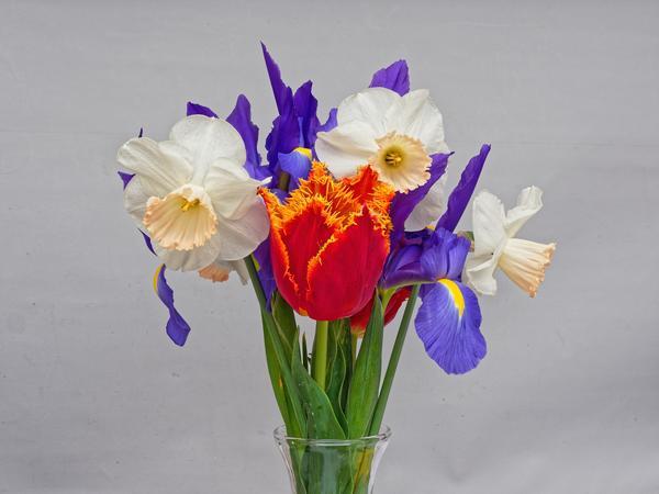 Flowers-4-DMap.jpeg