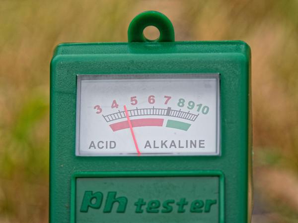 Dead-lilac-pH.jpeg