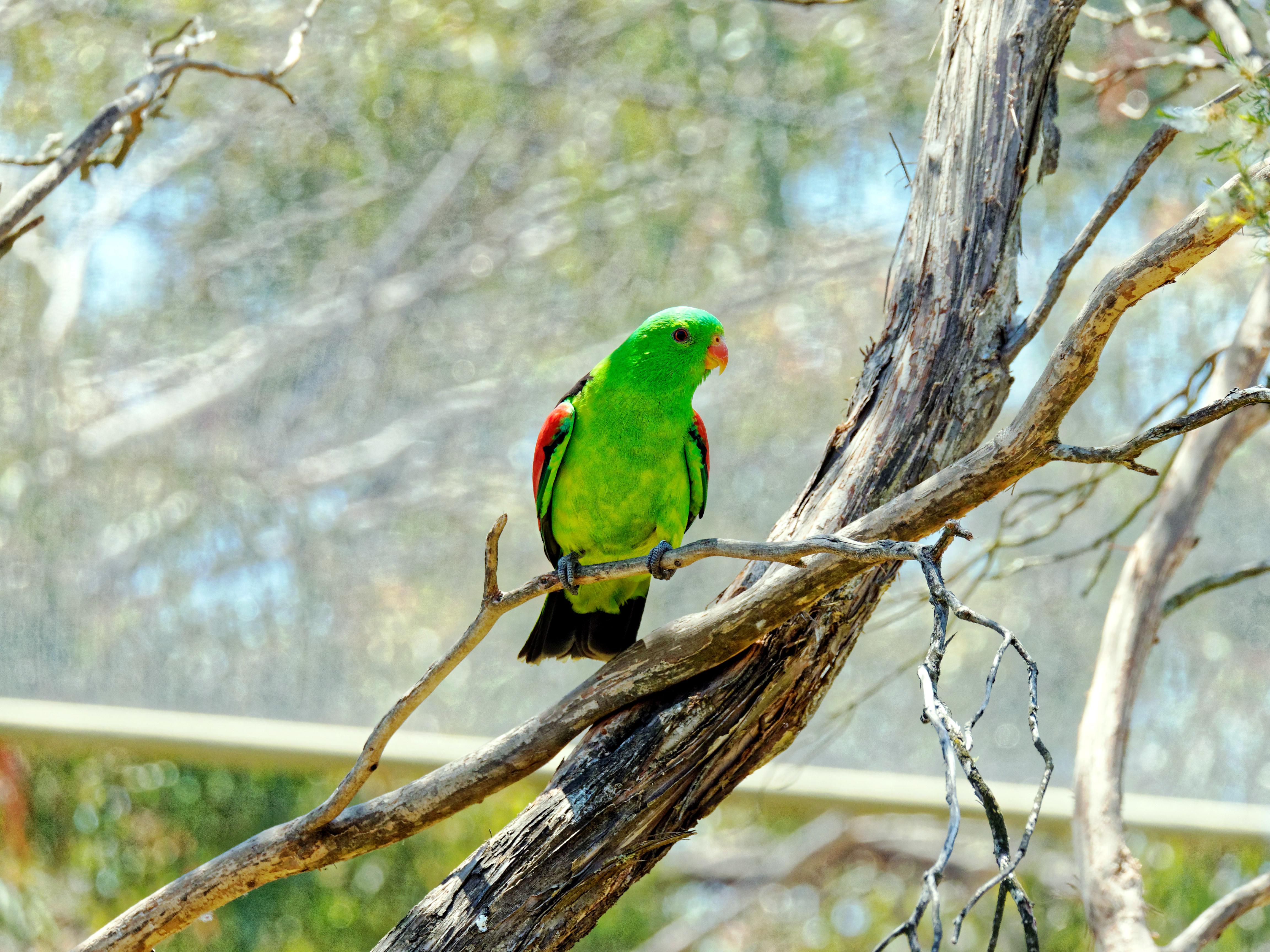 Ballarat-Bird-World-18.jpeg