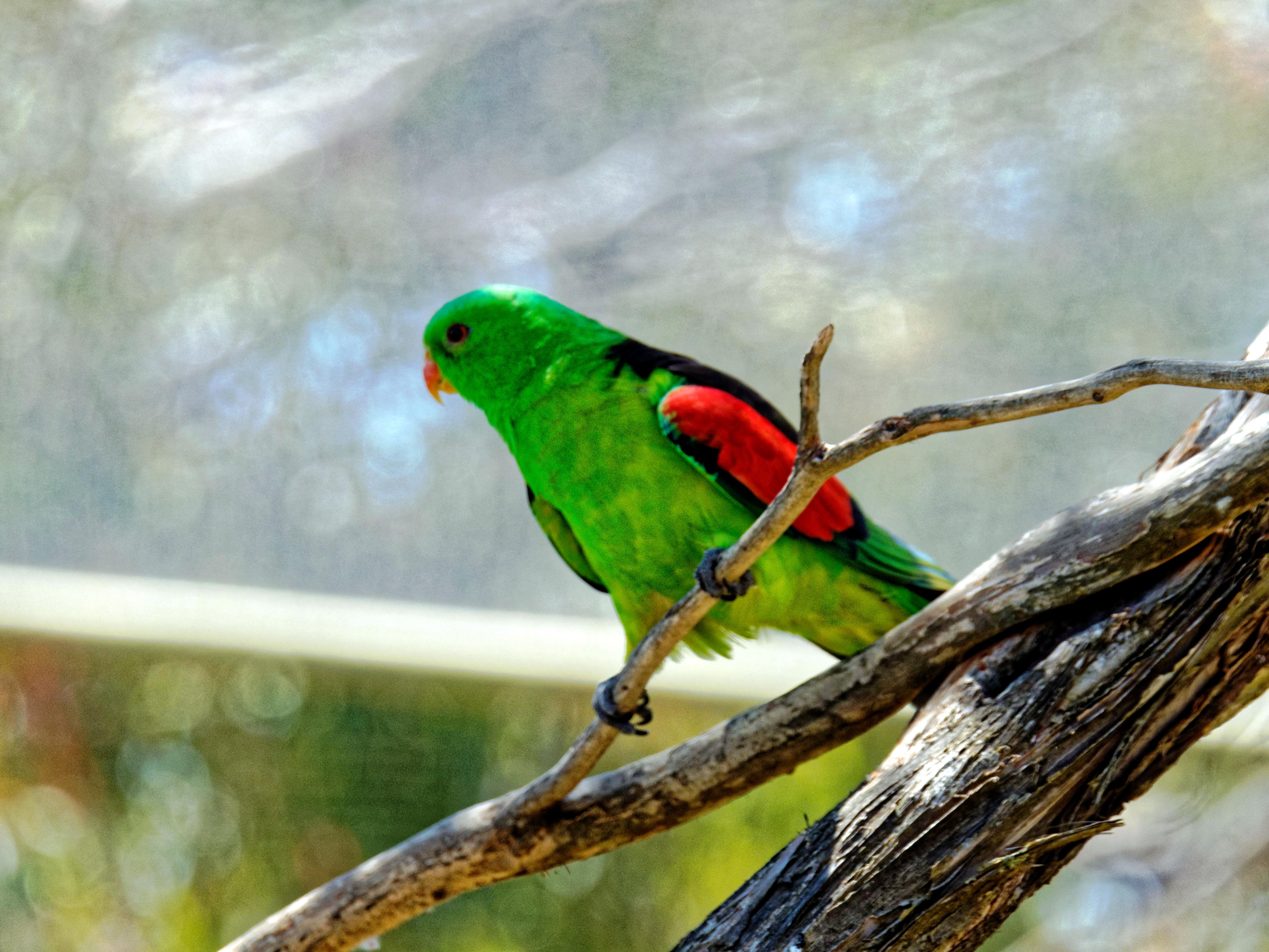 Ballarat-Bird-World-21.jpeg
