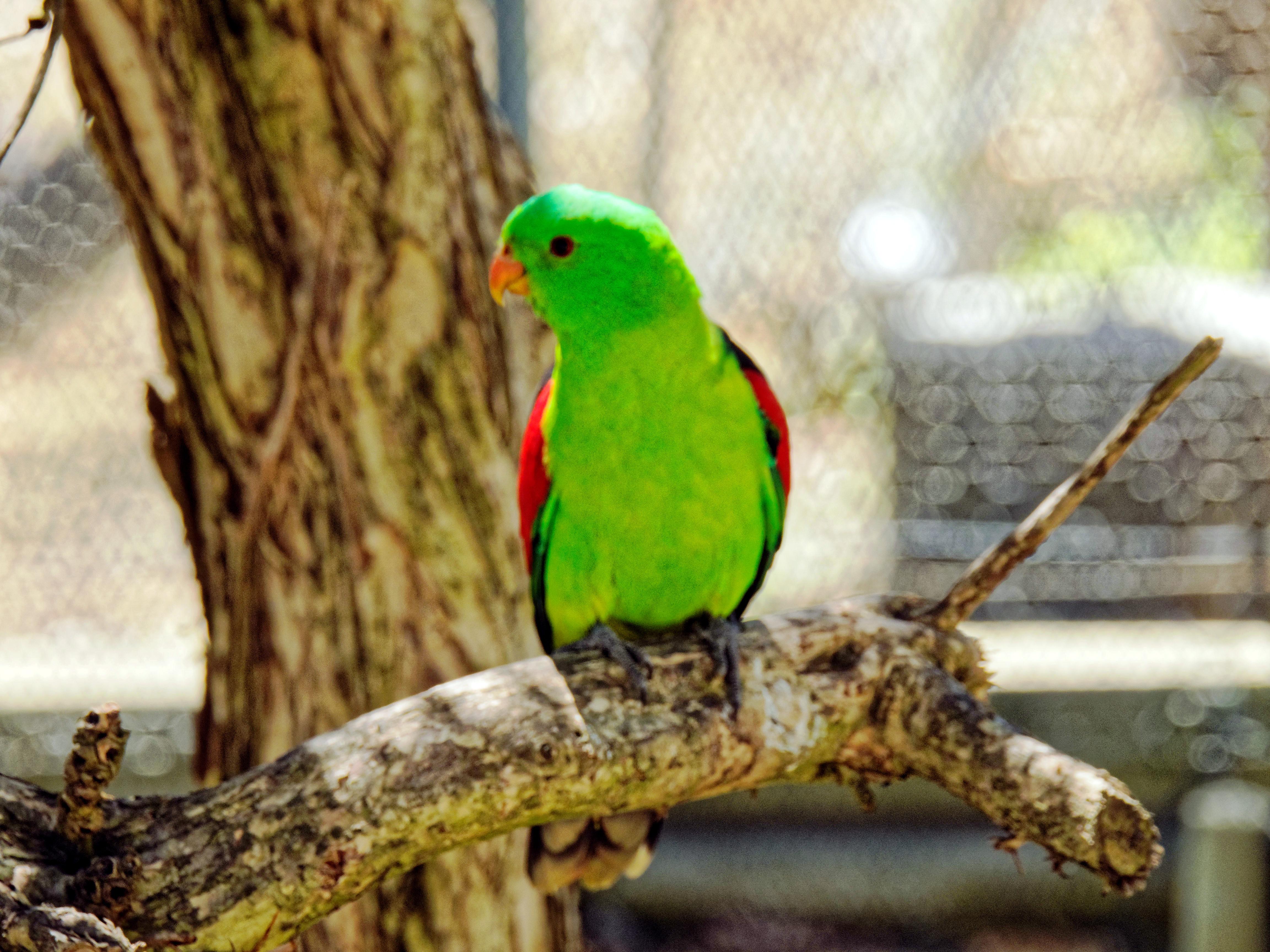 Ballarat-Bird-World-25.jpeg