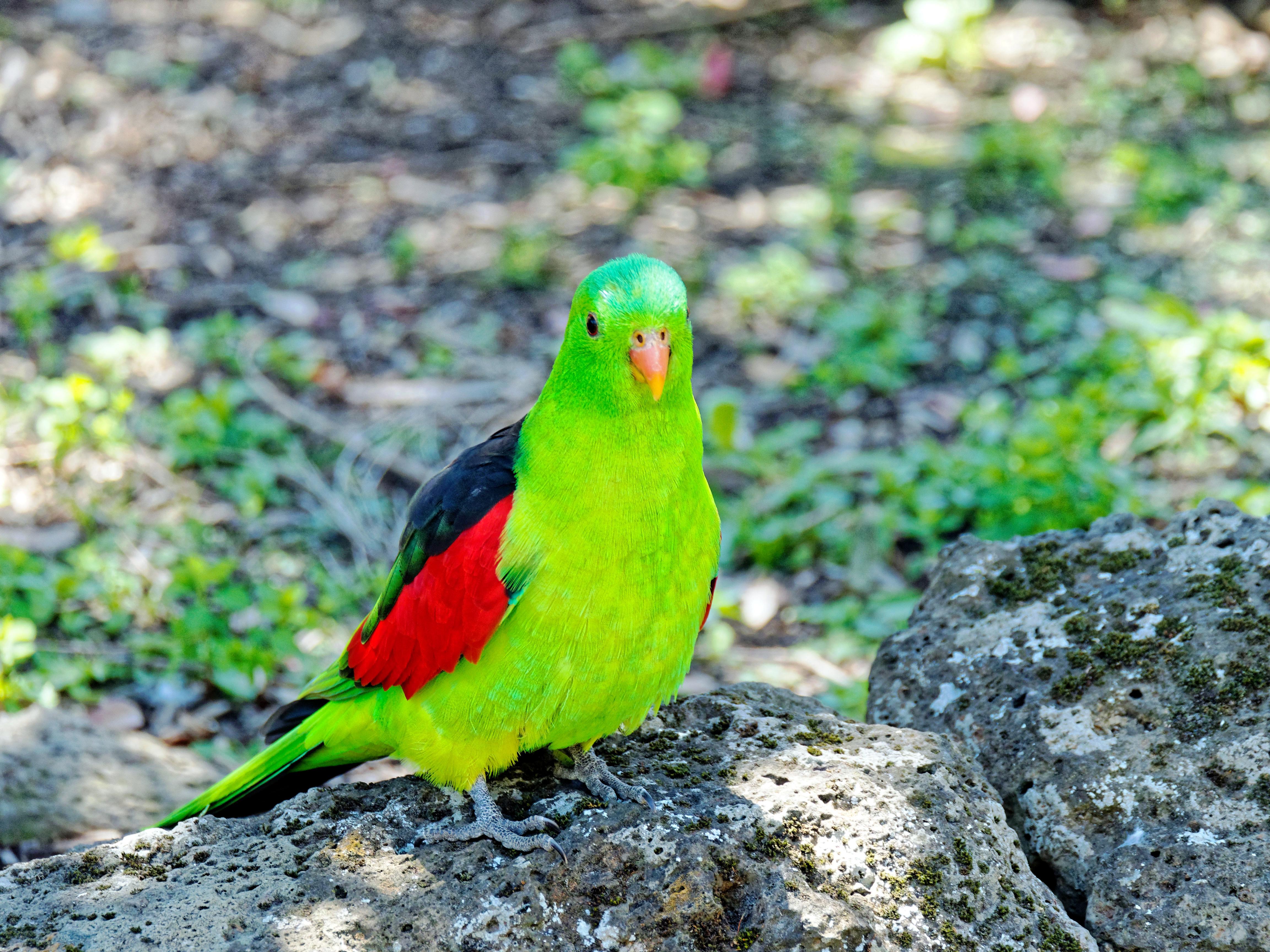 Ballarat-Bird-World-26.jpeg