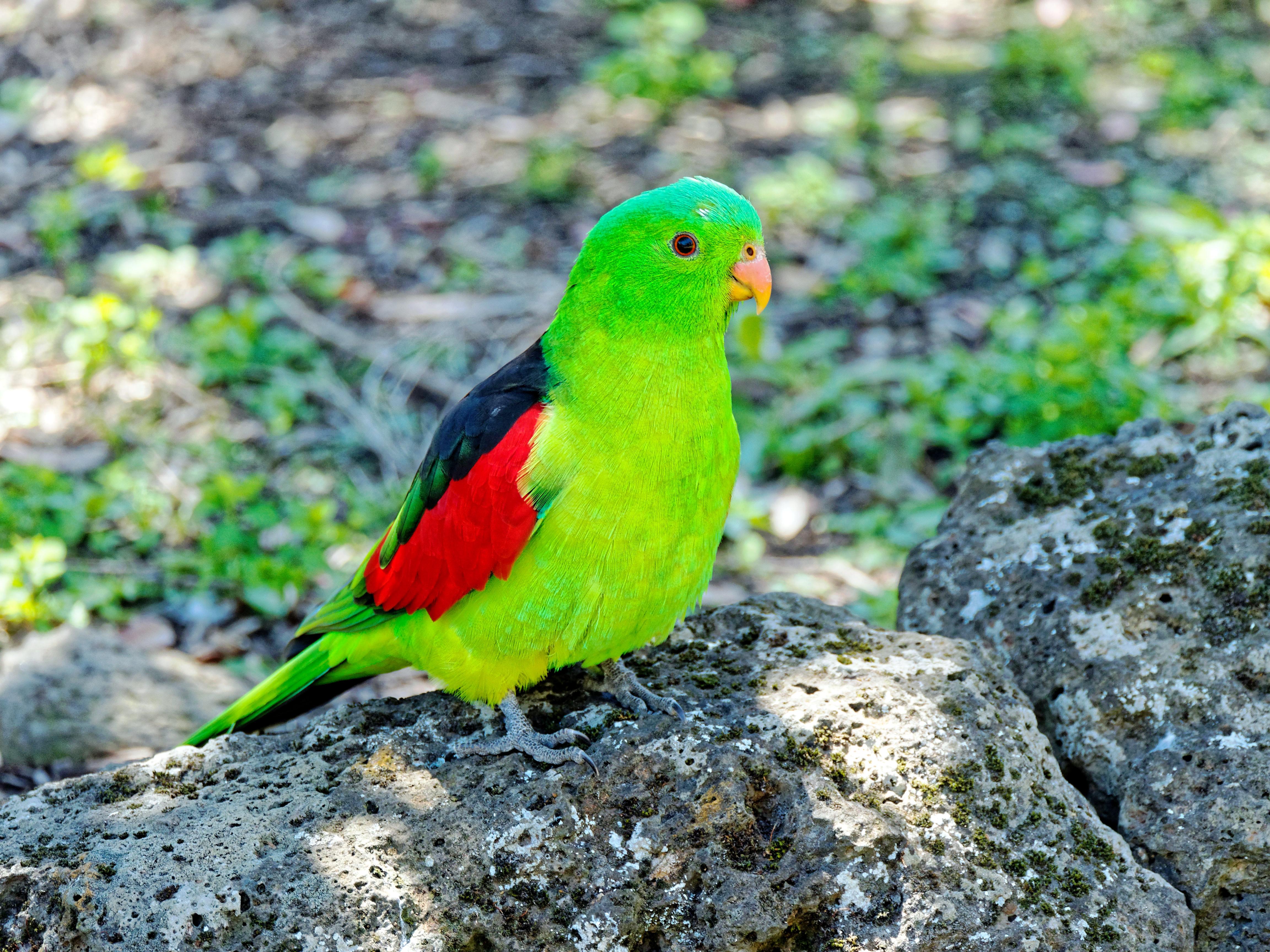 Ballarat-Bird-World-27.jpeg