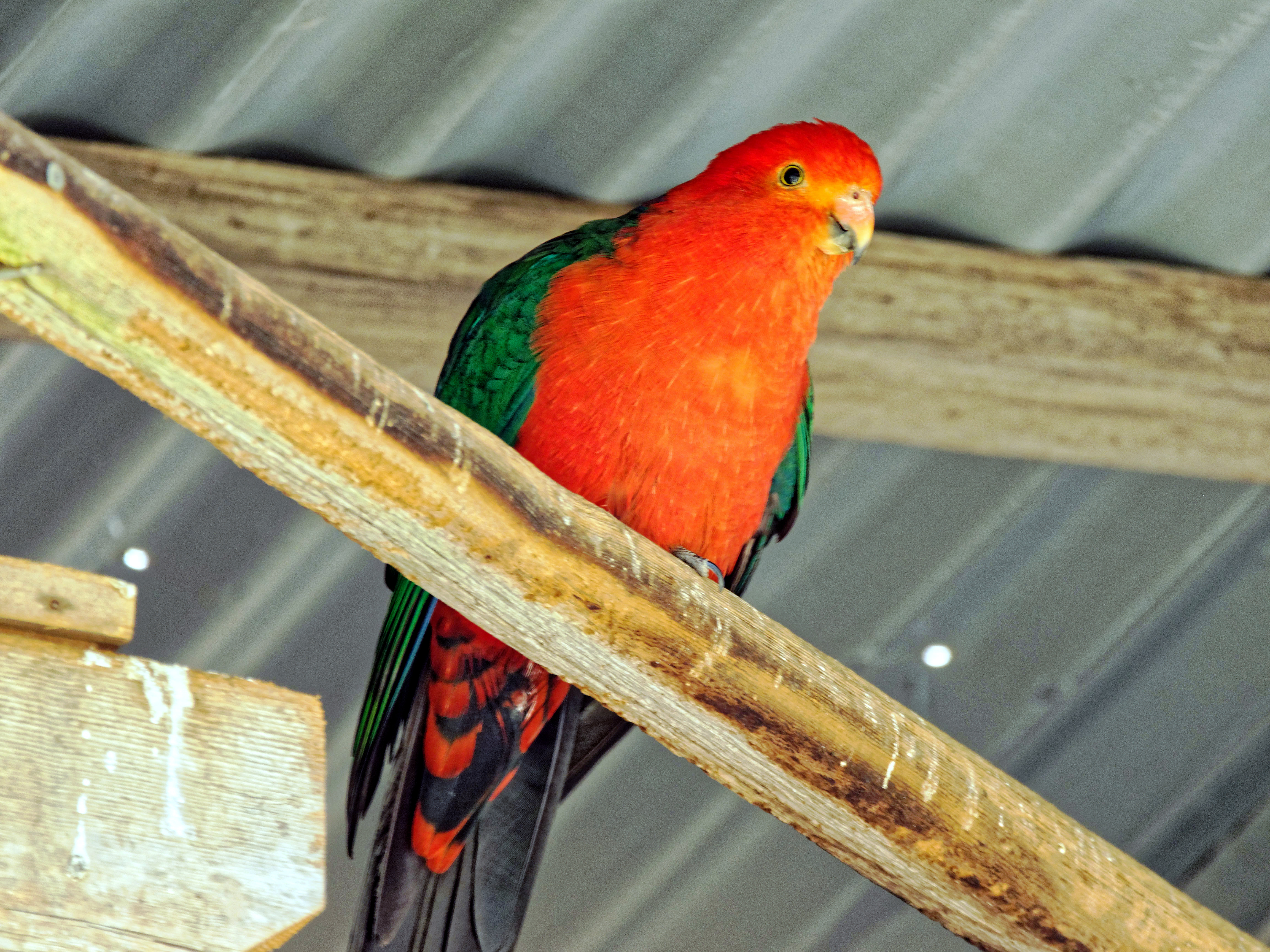 Ballarat-Bird-World-38.jpeg