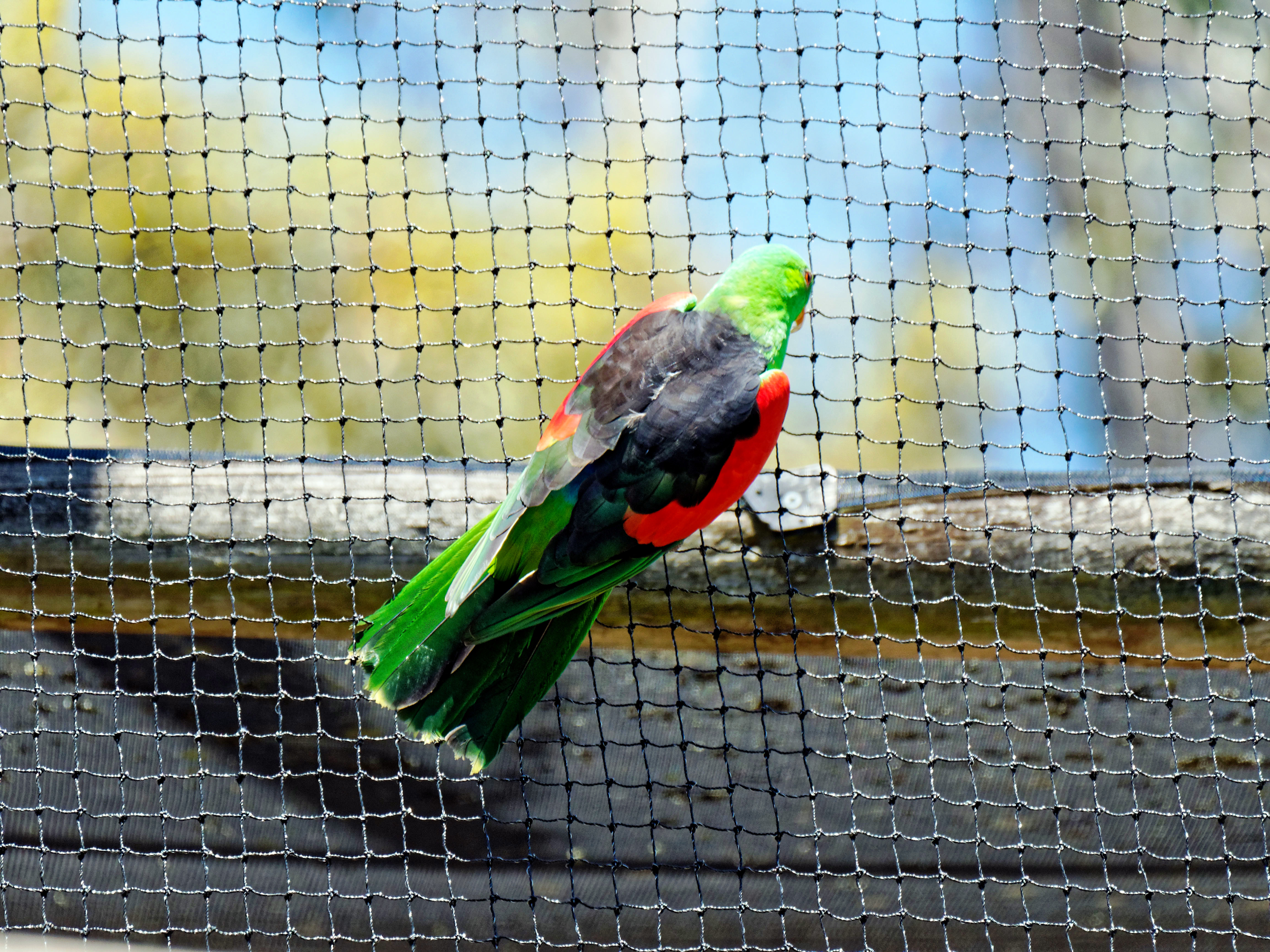 Ballarat-Bird-World-40.jpeg