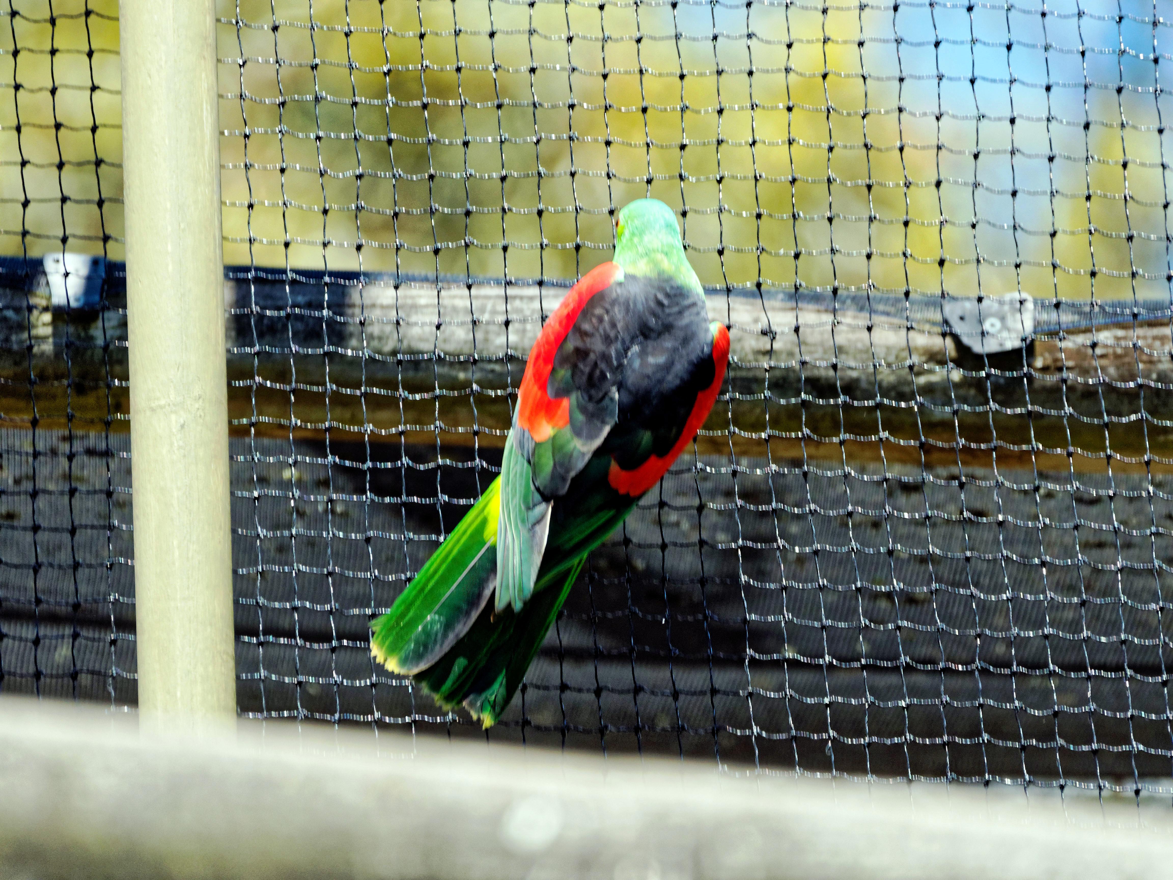 Ballarat-Bird-World-41.jpeg