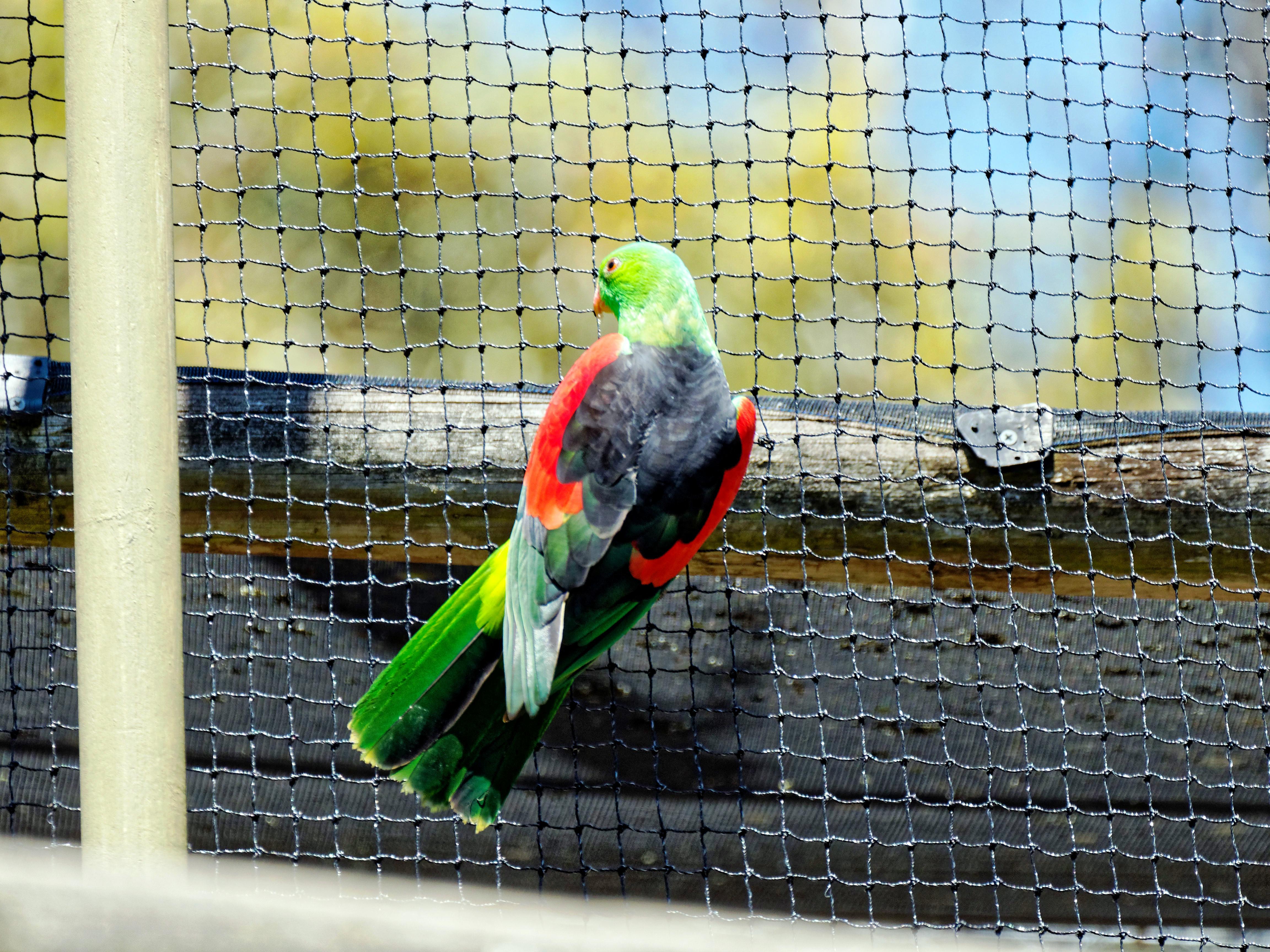 Ballarat-Bird-World-42.jpeg