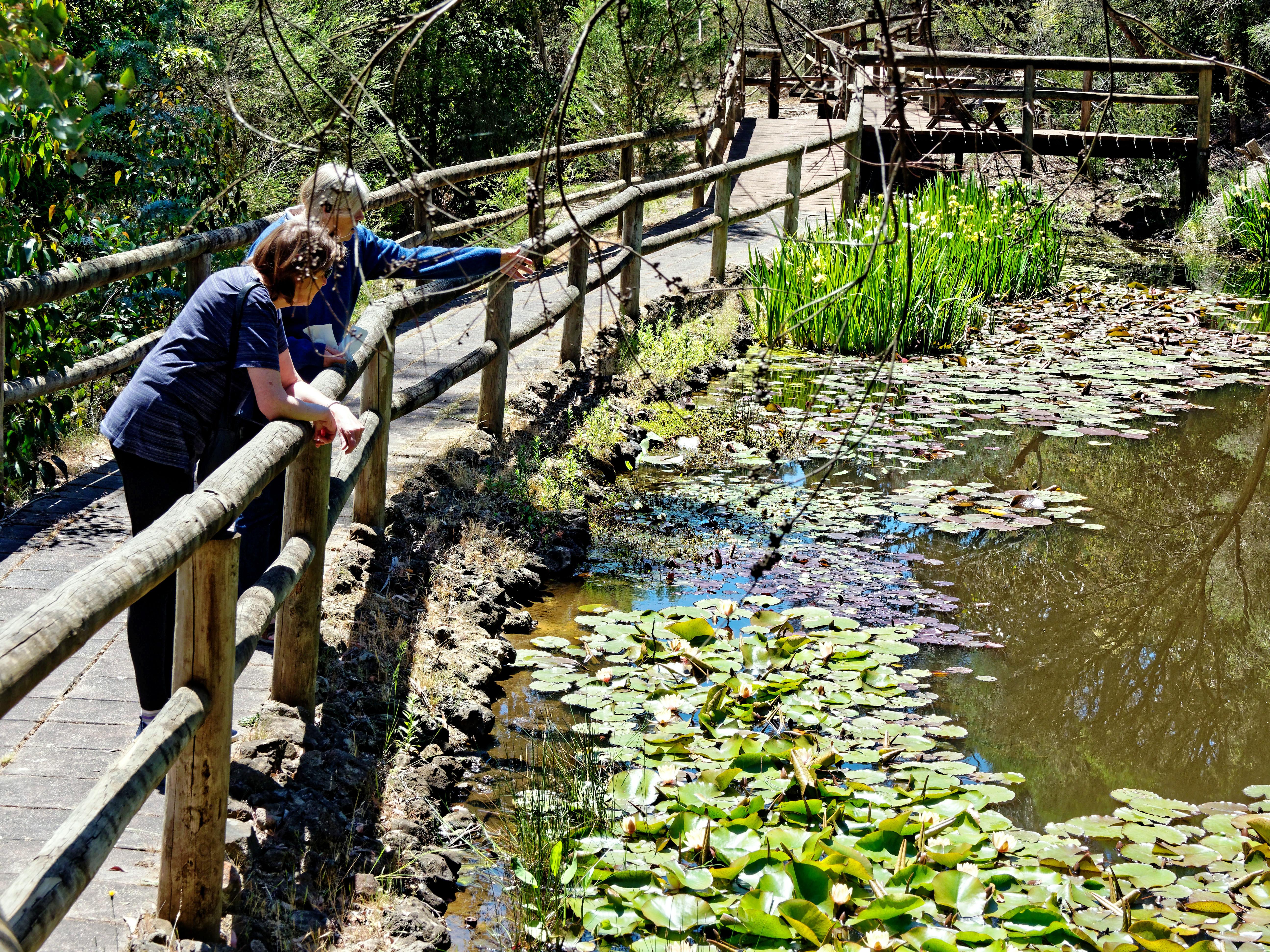 Ballarat-Bird-World-49.jpeg