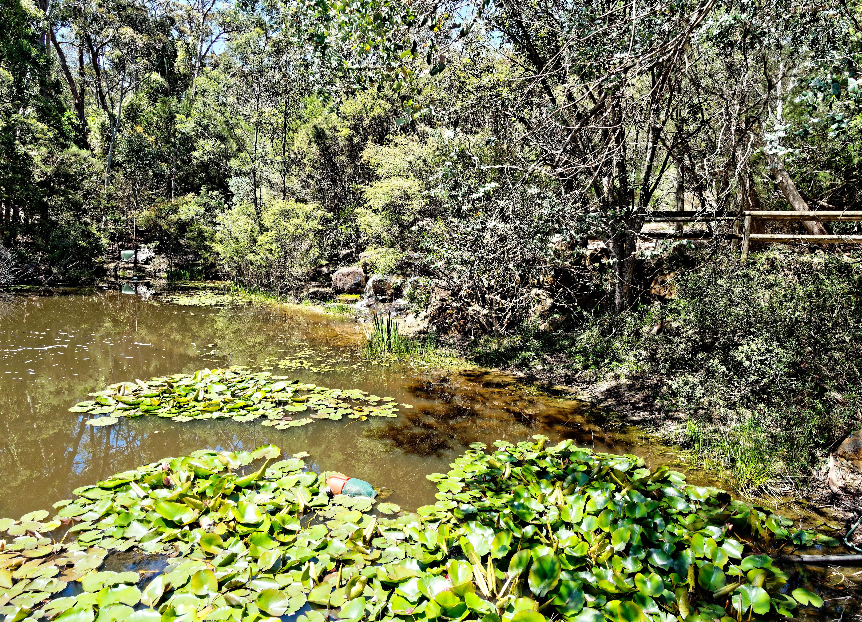 Ballarat-Bird-World-56.jpeg