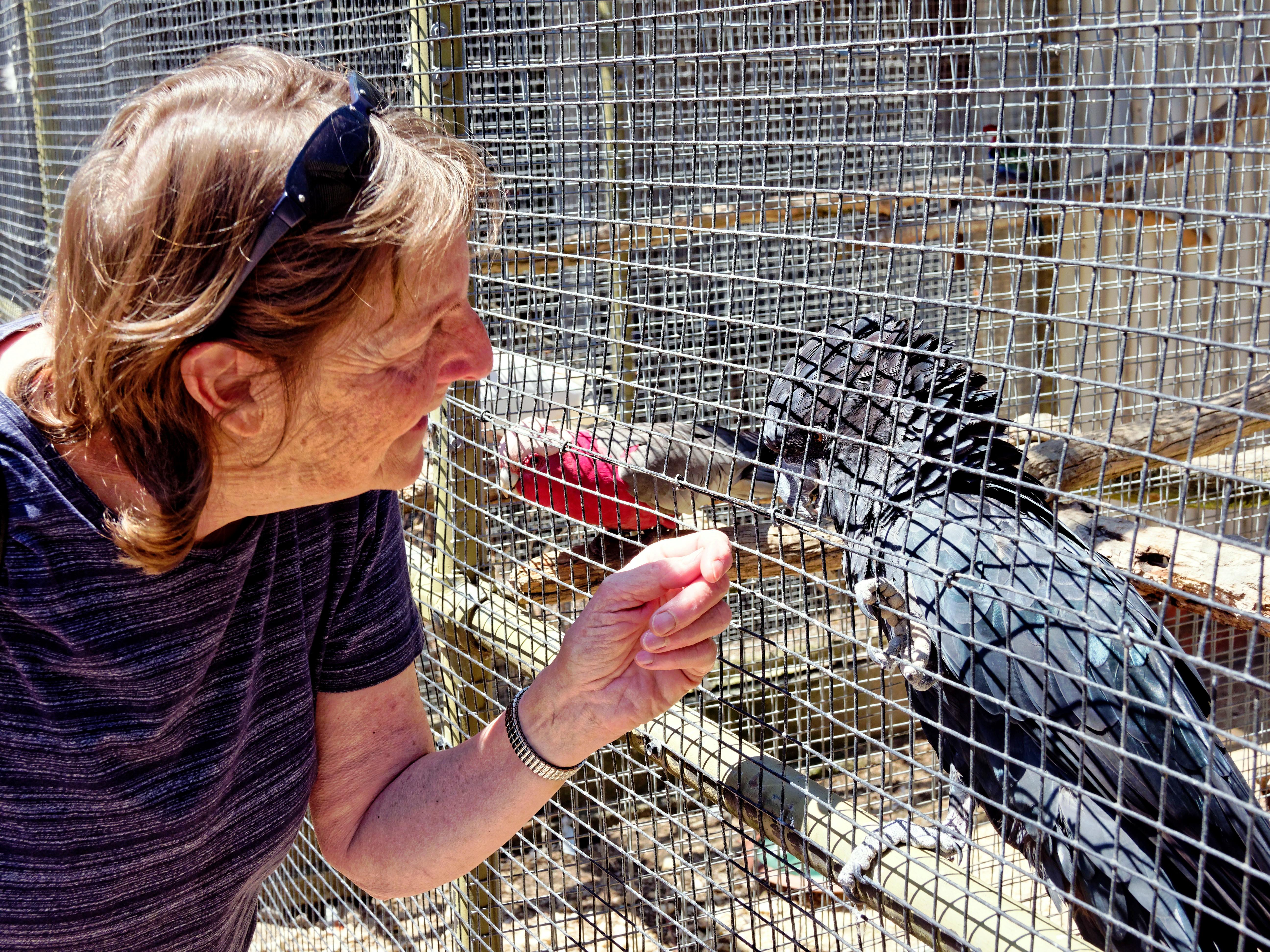 Ballarat-Bird-World-9.jpeg