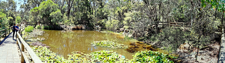 Bird-world-pond.jpeg