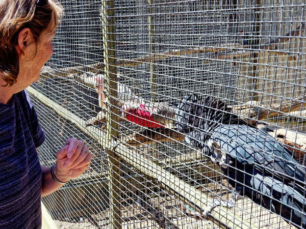 Ballarat-Bird-World-10.jpeg