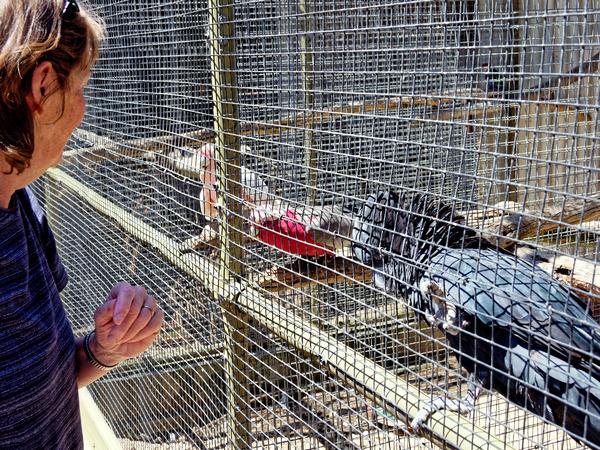 Ballarat-Bird-World-11.jpeg