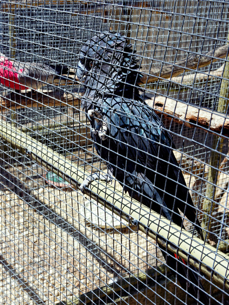 Ballarat-Bird-World-12.jpeg