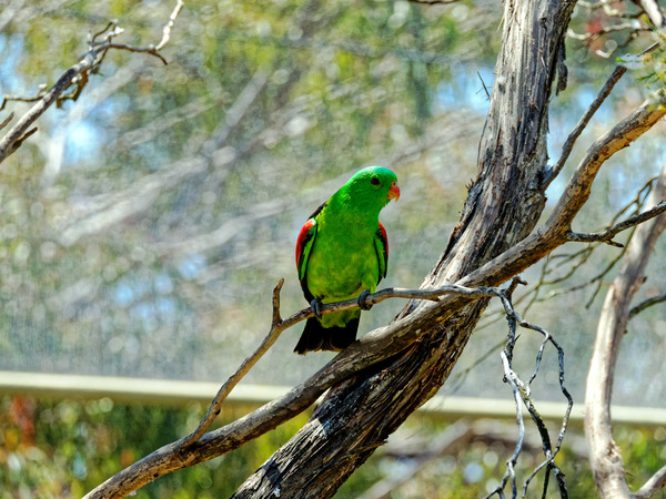 Ballarat-Bird-World-19.jpeg