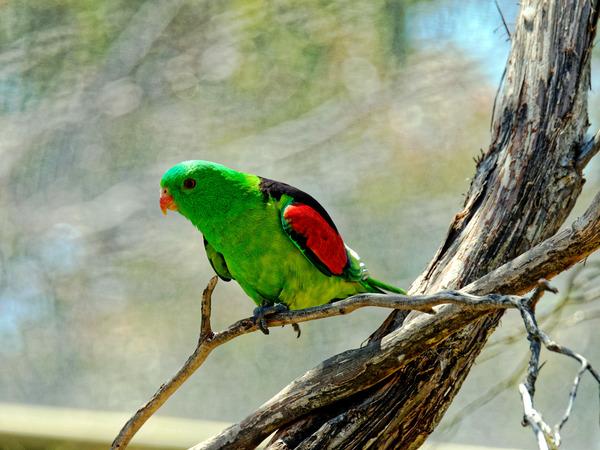 Ballarat-Bird-World-20.jpeg