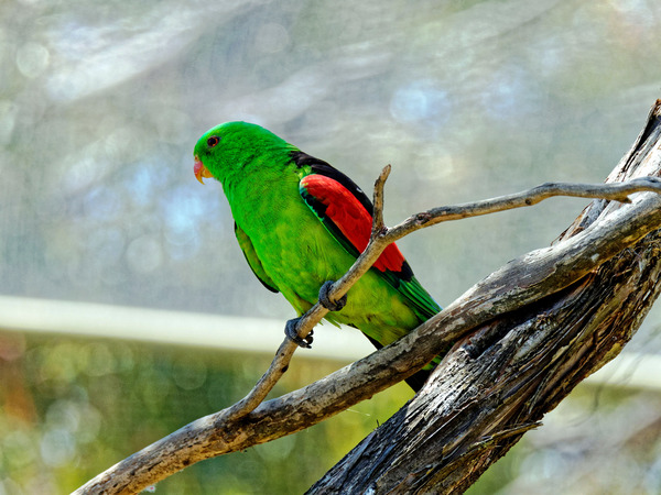 Ballarat-Bird-World-22.jpeg