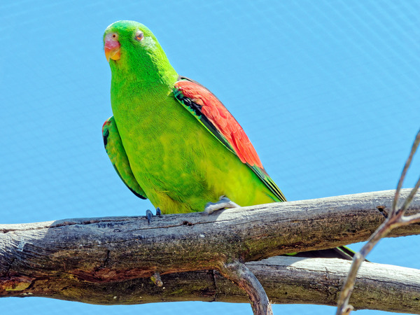Ballarat-Bird-World-23.jpeg