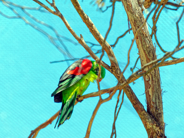 Ballarat-Bird-World-30.jpeg