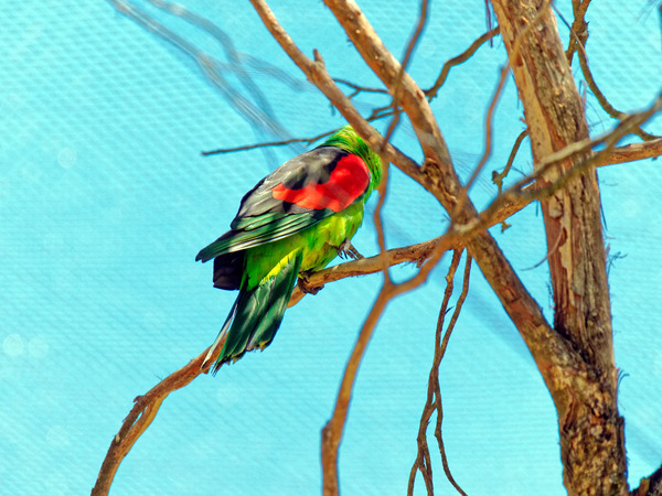 Ballarat-Bird-World-31.jpeg