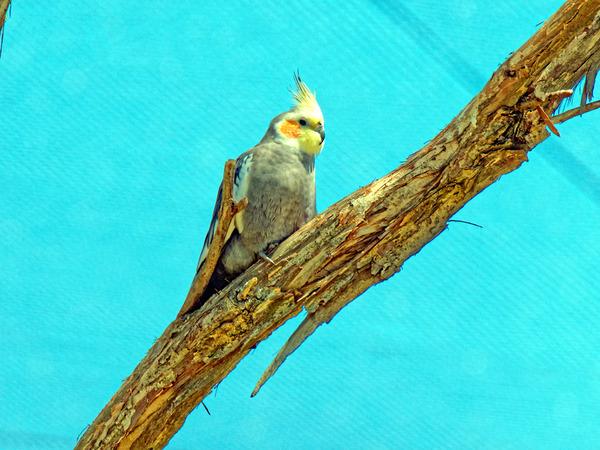 Ballarat-Bird-World-32.jpeg