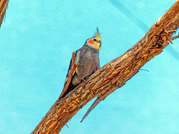 Ballarat-Bird-World-33.jpeg