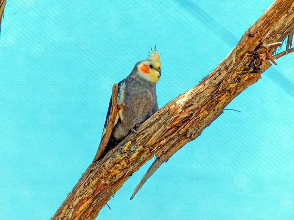 Ballarat-Bird-World-34.jpeg