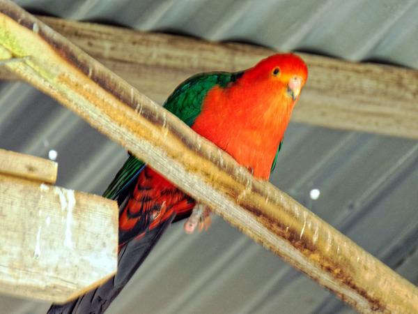 Ballarat-Bird-World-36.jpeg