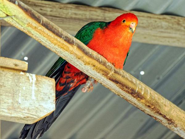 Ballarat-Bird-World-37.jpeg