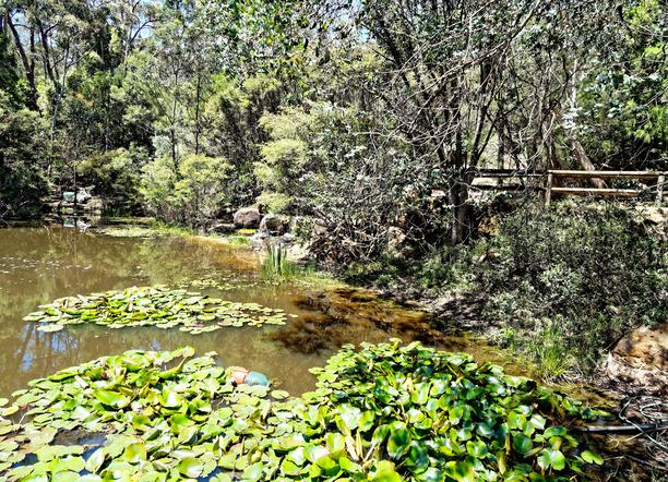 Ballarat-Bird-World-51.jpeg