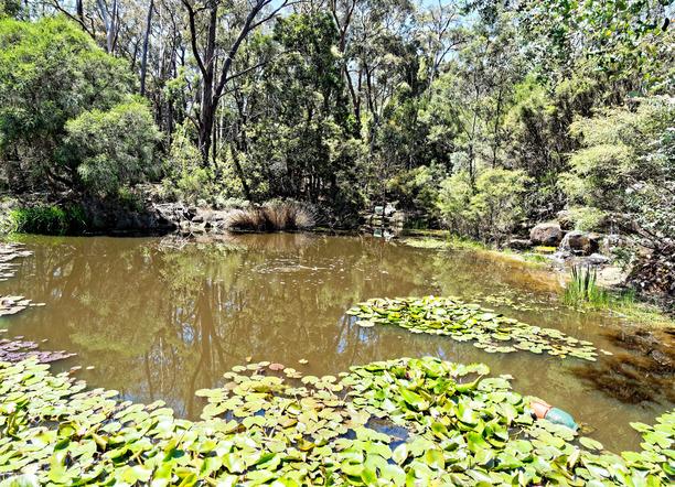 Ballarat-Bird-World-55.jpeg