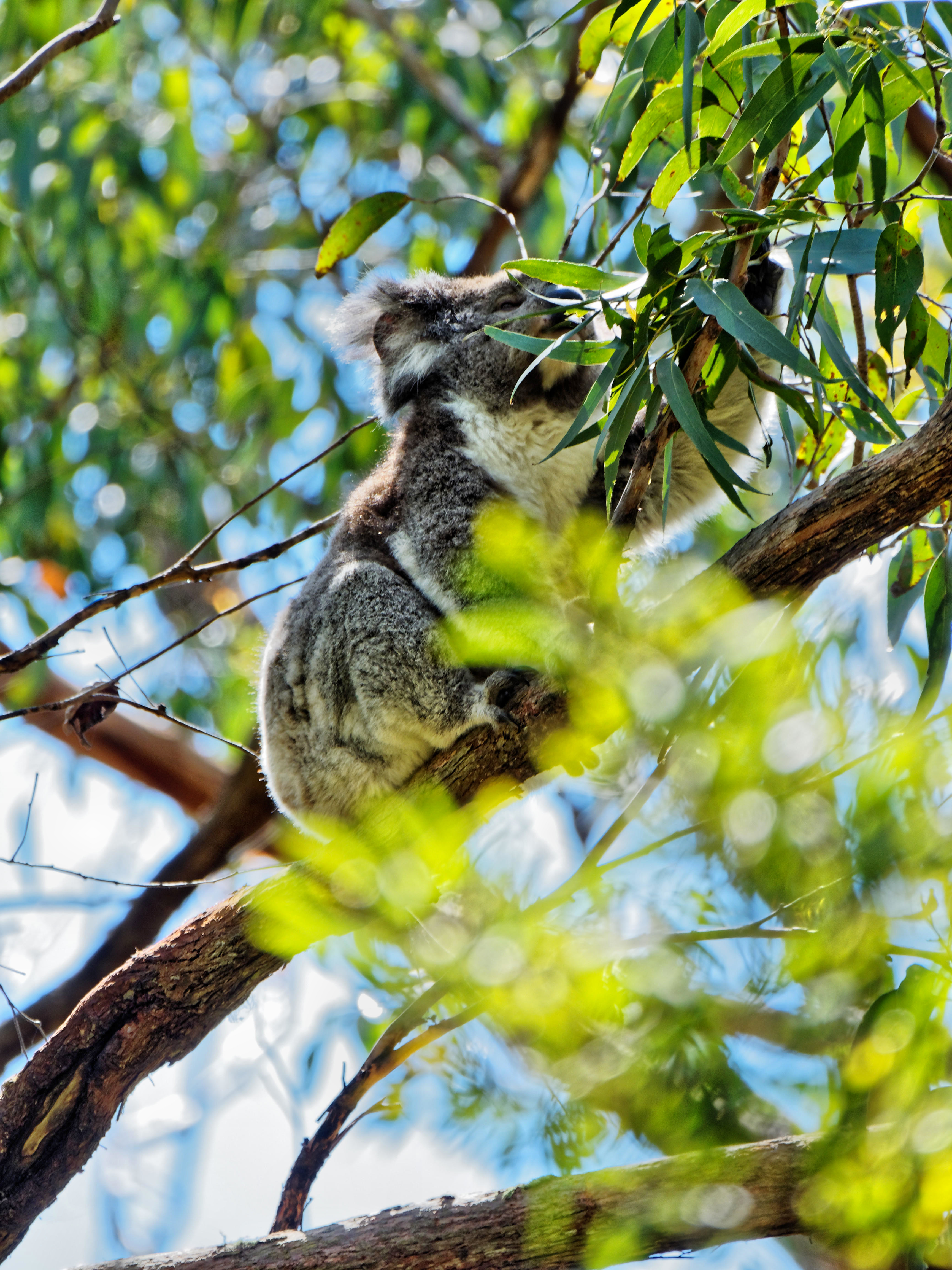 This should be Koala-10.jpeg.  Is it missing?